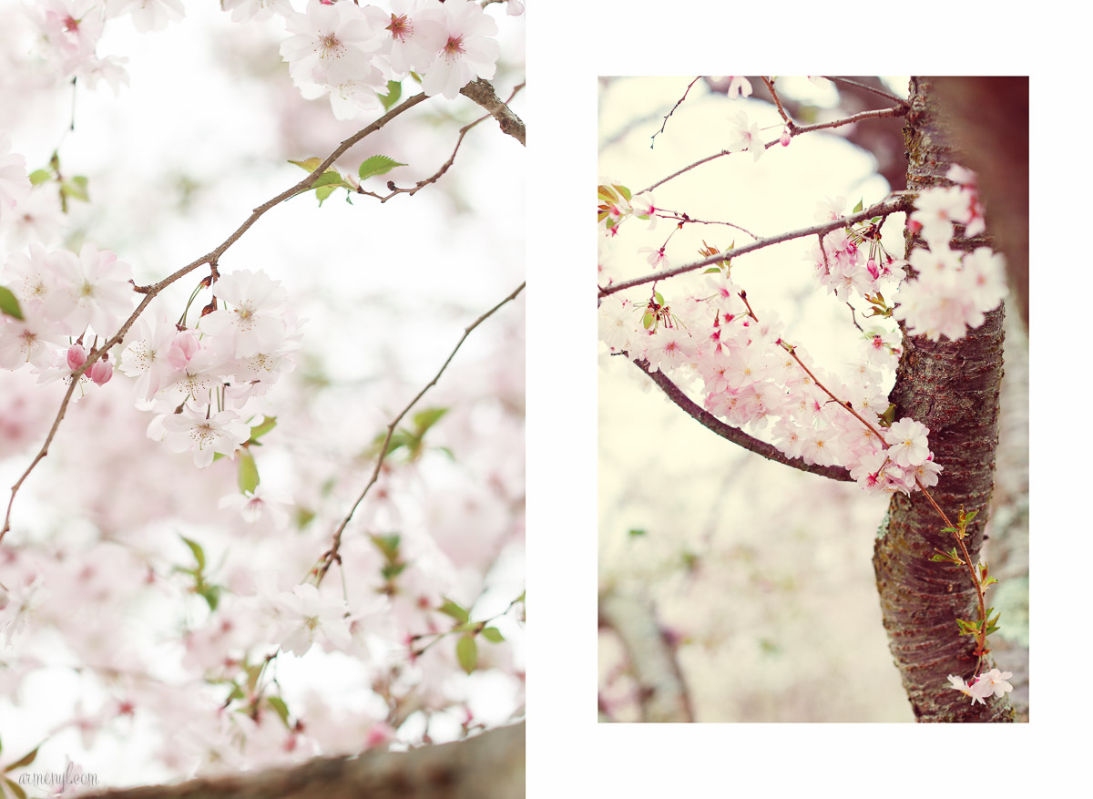 Flowers in bloom, spring season Photographed-by-Armenyl.com-6
