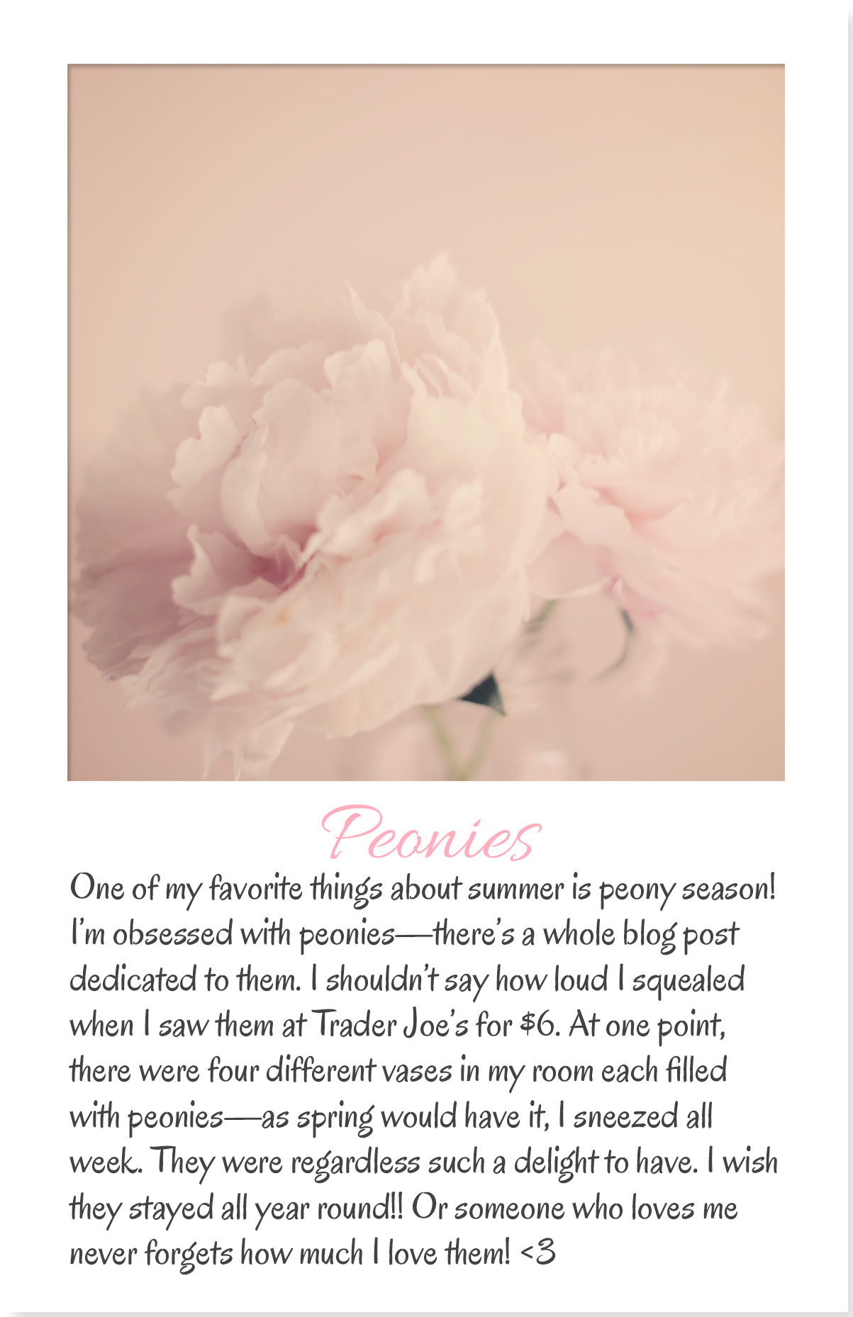 Armenyl's list and photographs of summer favorites, favorite flowers peonies by Armenyl.com