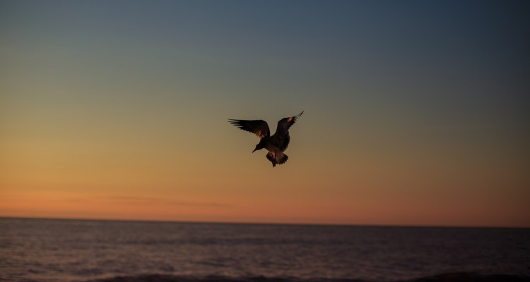 Bird in the sky at sunrise by photograher Armenyl.com-2
