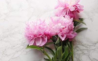 Flowers-Peonies-in-Armenyl-inspirations