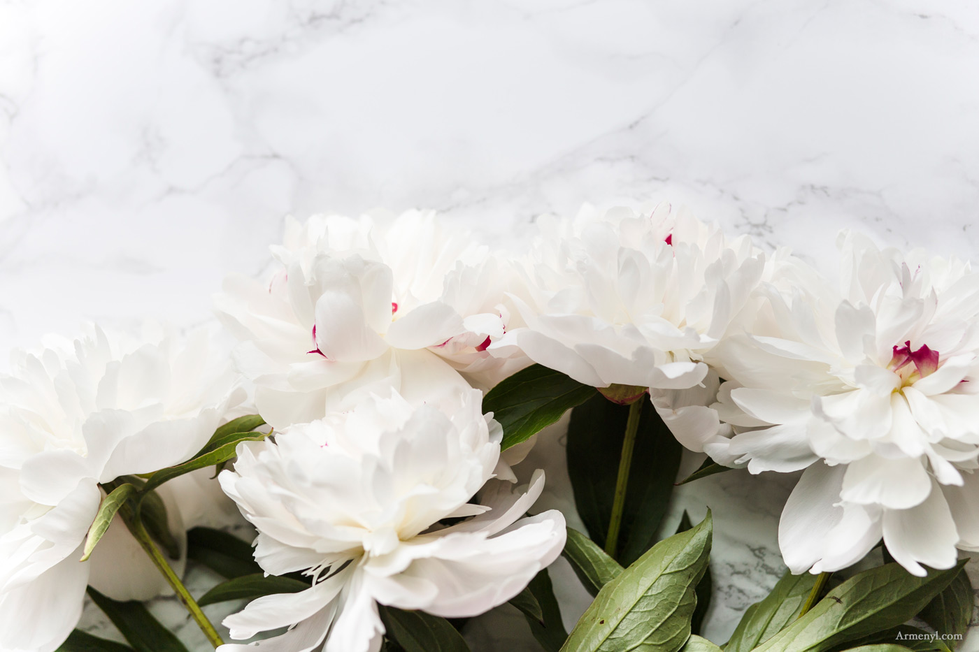White Peonies Armenyl